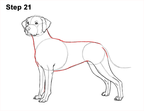How to Draw Dalmatian Puppy 21