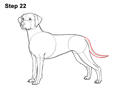 How to Draw Dalmatian Puppy 22