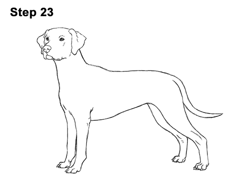 How to Draw Dalmatian Puppy 23