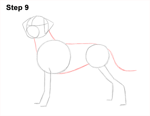 How to Draw Dalmatian Puppy 9