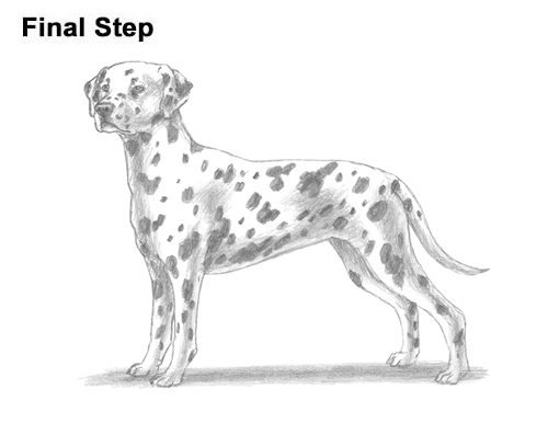 How to Draw Dalmatian Puppy