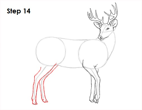 Draw White Tailed Deer 14