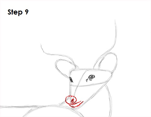 Draw White Tailed Deer 9