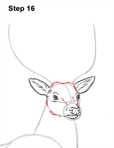 How to Draw Noble Deer Antlers Majestic Buck Stag 16
