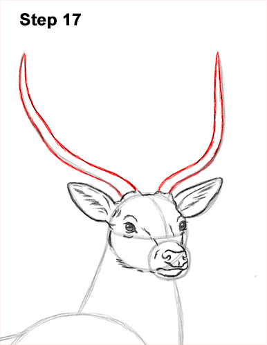How to Draw Noble Deer Antlers Majestic Buck Stag 17