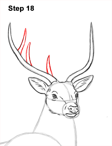 How to Draw Noble Deer Antlers Majestic Buck Stag 18