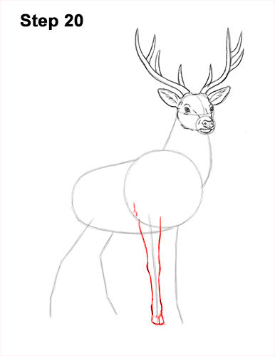 How to Draw Noble Deer Antlers Majestic Buck Stag 20