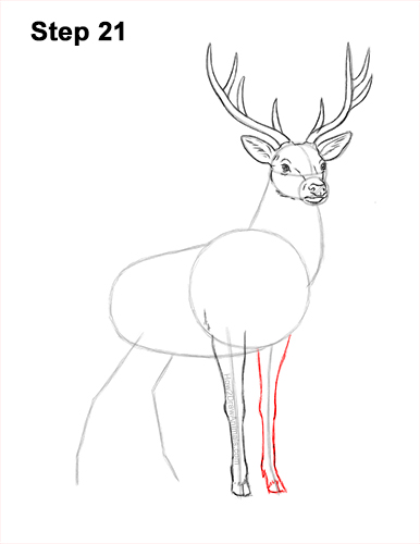 How to Draw Noble Deer Antlers Majestic Buck Stag 21