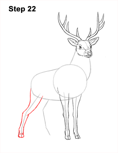 How to Draw Noble Deer Antlers Majestic Buck Stag 22