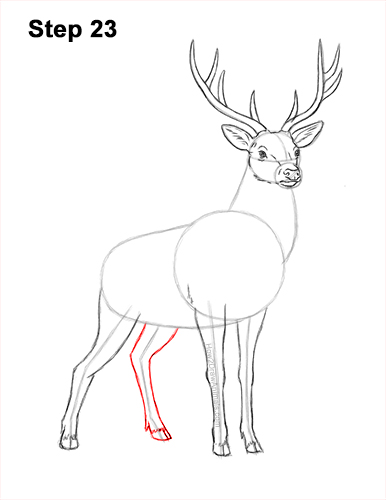 How to Draw Noble Deer Antlers Majestic Buck Stag 23