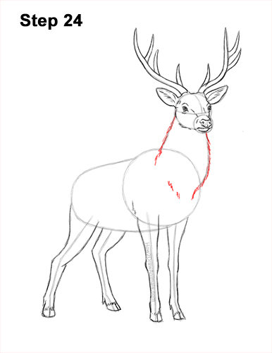 How to Draw Noble Deer Antlers Majestic Buck Stag 24