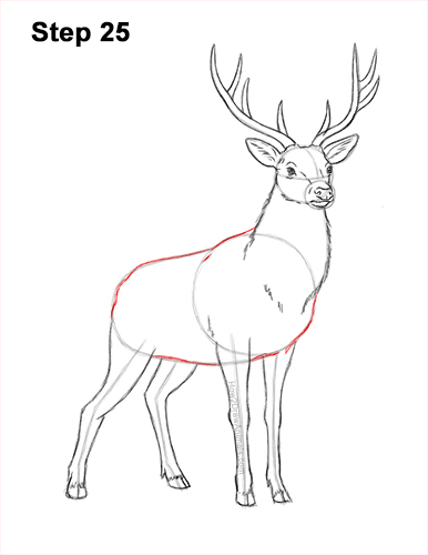 How to Draw Noble Deer Antlers Majestic Buck Stag 25