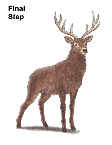 How to Draw Noble Deer Antlers Majestic Buck Stag Color