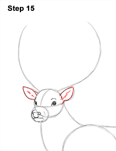 How to Draw a Red Deer Buck Stag Antlers 15