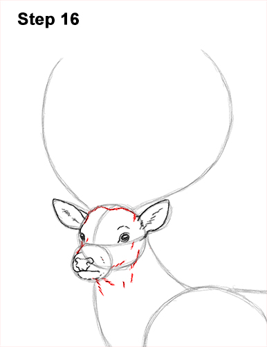 How to Draw a Red Deer Buck Stag Antlers 16