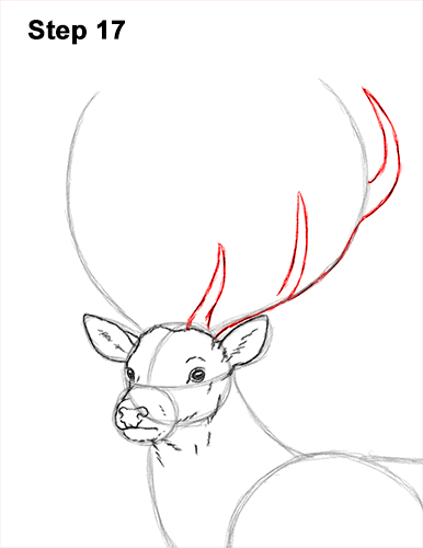 How to Draw a Red Deer Buck Stag Antlers 17