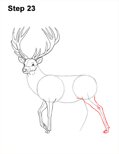 How to Draw a Red Deer Buck Stag Antlers 23