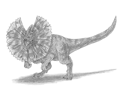How to Draw a Diolophosaurus Dinosaur