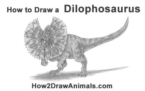 How to Draw a Dilophosaurus Dinosaur
