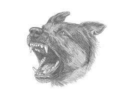 How to Draw a German Shepherd Dog Barking