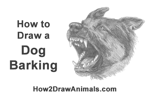 How to Draw Angry German Shepherd Dog Barking Head Detail