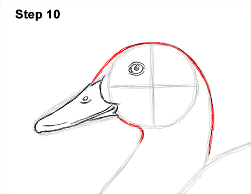How to Draw a Male Mallard Duck Color 10