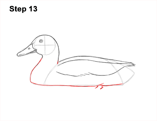 How to Draw a Male Mallard Duck Color 13