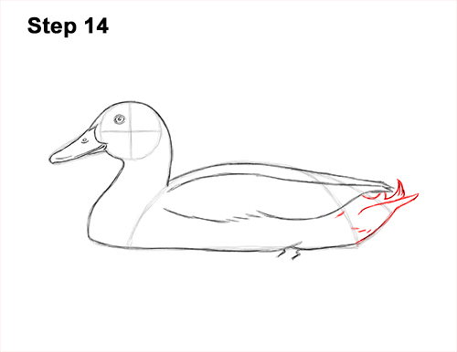 How to Draw a Male Mallard Duck Color 14
