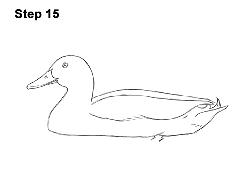 How to Draw a Male Mallard Duck Color 15