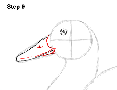 How to Draw a Male Mallard Duck Color 9