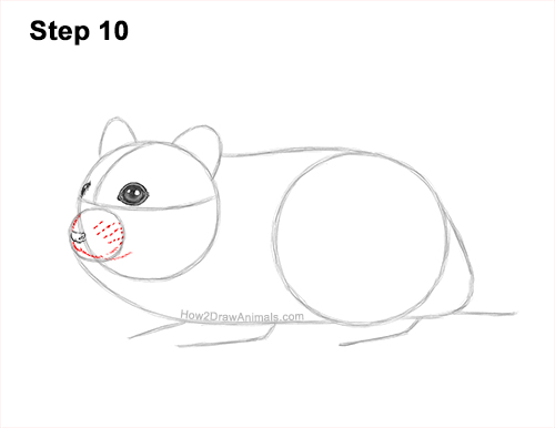 How to Draw a Russian Winter White Dwarf Hamster 10