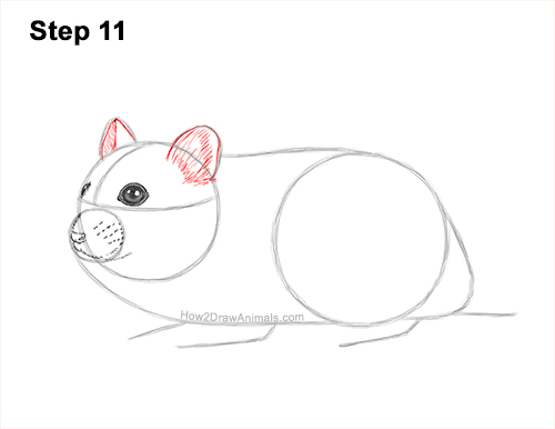 How to Draw a Russian Winter White Dwarf Hamster 11