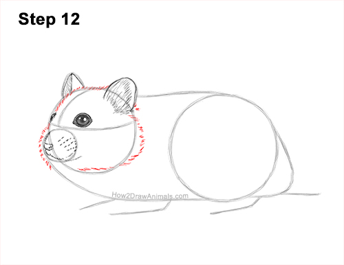 How to Draw a Russian Winter White Dwarf Hamster 12