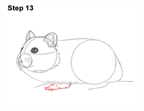 How to Draw a Russian Winter White Dwarf Hamster 13