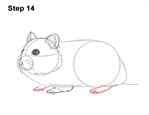 How to Draw a Russian Winter White Dwarf Hamster 14