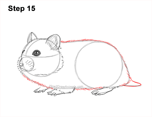 How to Draw a Russian Winter White Dwarf Hamster 15