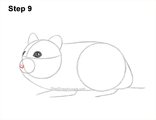 How to Draw a Russian Winter White Dwarf Hamster 9