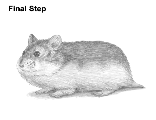 How to Draw a Russian Winter White Dwarf Hamster