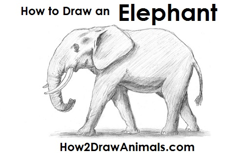 How to Draw an African Elephant Side View