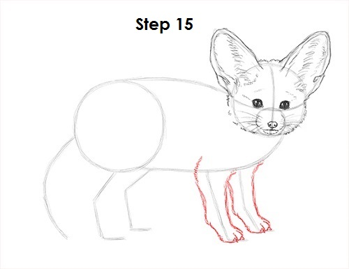 Draw Fennec Fox 15