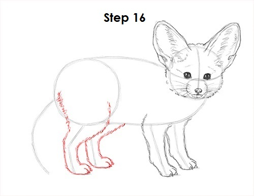 Draw Fennec Fox 16