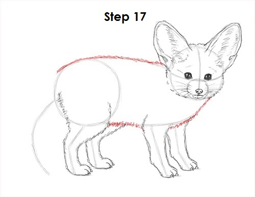 Draw Fennec Fox 17