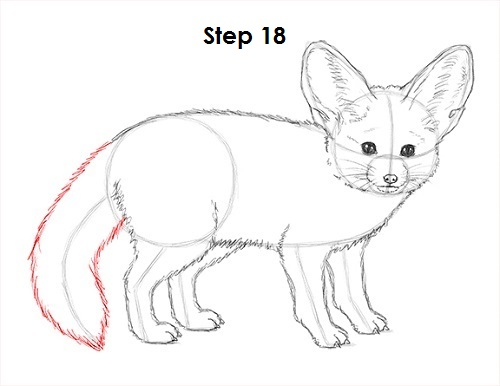 Draw Fennec Fox 18