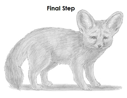 Draw Fennec Fox