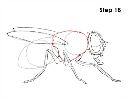 Draw Fly Insect 18