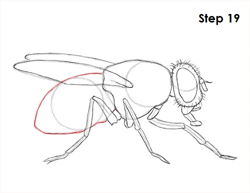 Draw Fly Insect 19