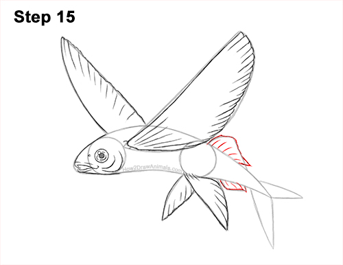 How to Draw a Flying Fish Cod Wings 15