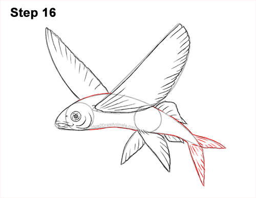 How to Draw a Flying Fish Cod Wings 16