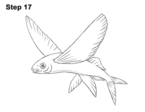 How to Draw a Flying Fish Cod Wings 17