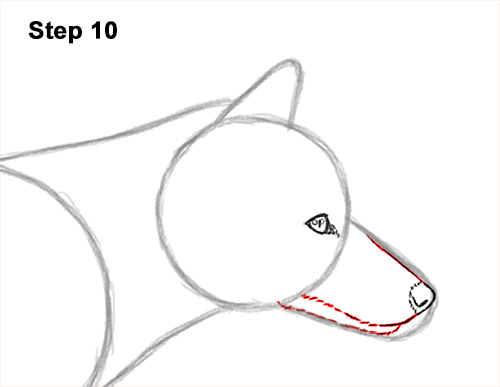 How to Draw a Red Fox Walking Side View 10